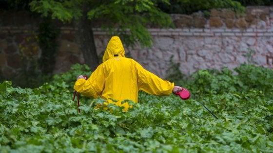 successivo Roma, parchi e giardini invasi dall'erba alta: inviateci le vostre foto