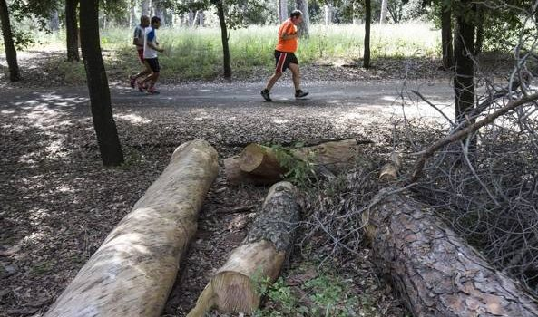 Villa Glori desolata tra vegetazione incolta e pozze a rischio zanzare