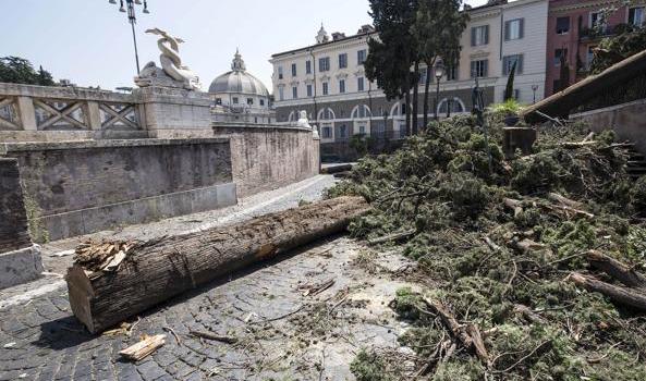 Gli alberi, così senza speranza Manutenzione: un flop continuo